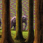 Visual Satiation: Elzo Durt gallery: image 1 of 11